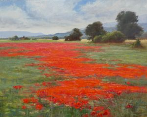 Open field of orange poppies