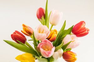 multicolor tulips gathered together in a bouquet